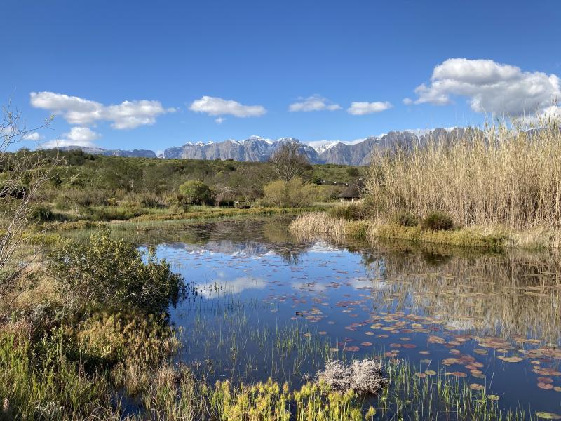 Figure 2: View from a family walk in the Helderberg reserve, where you can hopefully see some of the snowy peaks we've been treated with.